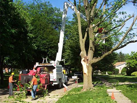 Услуги автовышки для обрезки деревьев